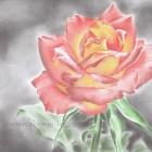 Как нарисовать розу поэтапно цветными карандашами