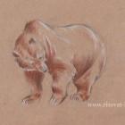 Как нарисовать медведя поэтапно карандашом