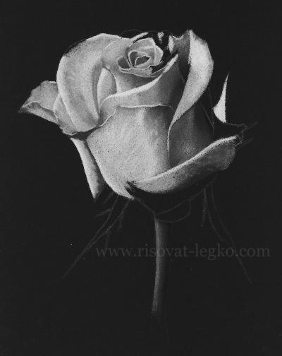 06.Как нарисовать розу карандашом: не простым, а белым!