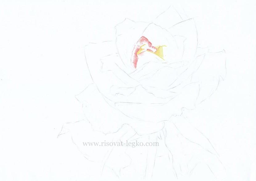 03.Как нарисовать розу поэтапно цветными карандашами
