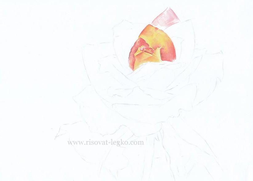 04.Как нарисовать розу поэтапно цветными карандашами