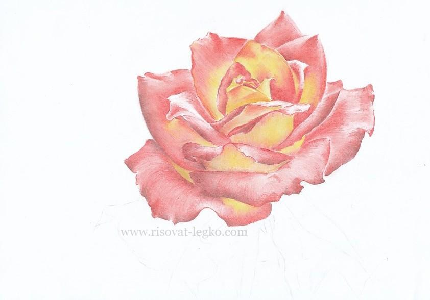 07.Как нарисовать розу поэтапно цветными карандашами