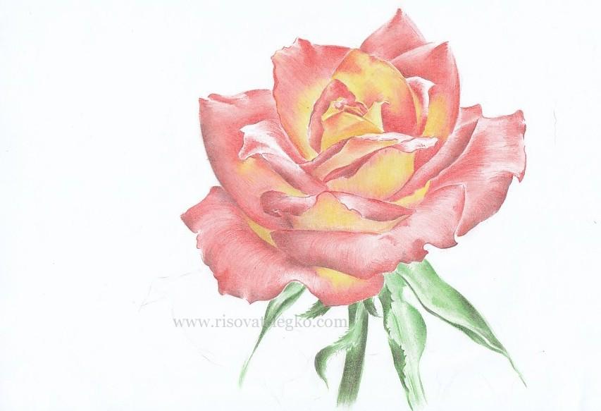Фото роза у моря