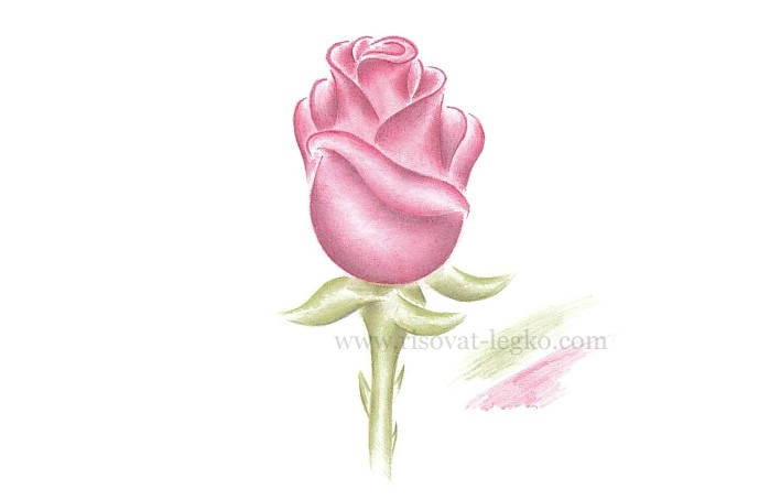 01.Как рисовать розу поэтапно: урок для начинающих