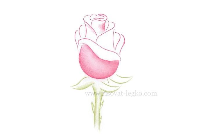 04.Как рисовать розу поэтапно: урок для начинающих