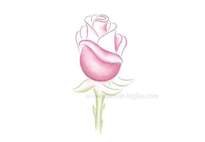 05.Как рисовать розу поэтапно: урок для начинающих