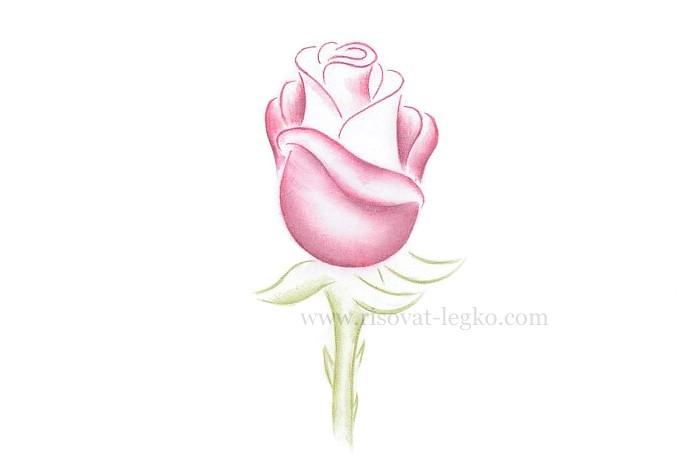 06.Как рисовать розу поэтапно: урок для начинающих