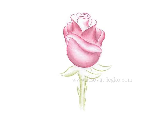 07.Как рисовать розу поэтапно: урок для начинающих
