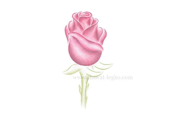 08.Как рисовать розу поэтапно: урок для начинающих