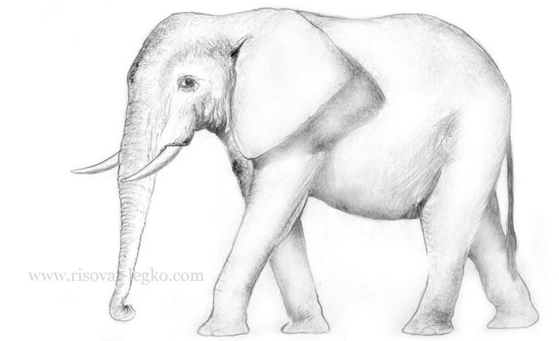 06.Как нарисовать слона карандашом поэтапно