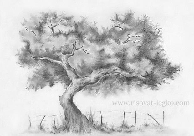 01.Как нарисовать дерево карандашом поэтапно