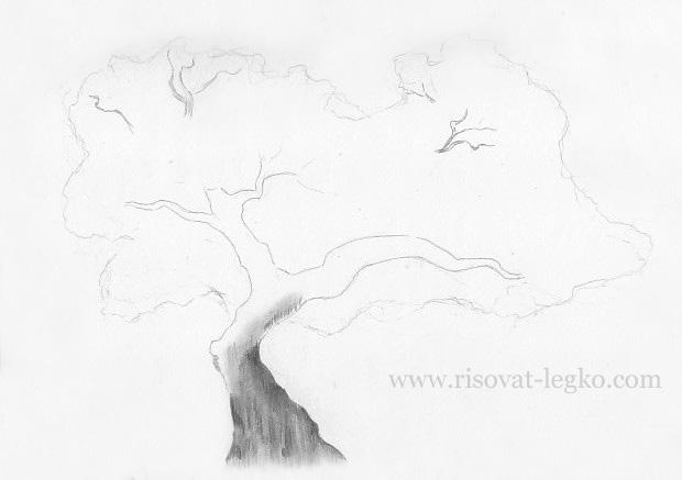 04.Как нарисовать дерево карандашом поэтапно