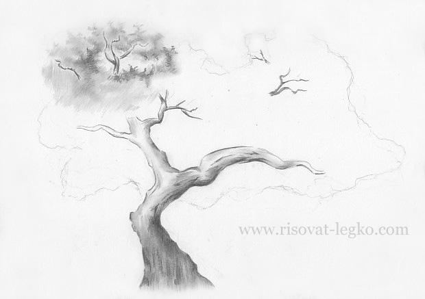 06.Как нарисовать дерево карандашом поэтапно