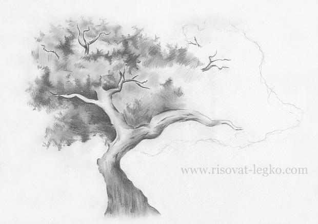 07.Как нарисовать дерево карандашом поэтапно
