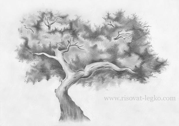 08.Как нарисовать дерево карандашом поэтапно