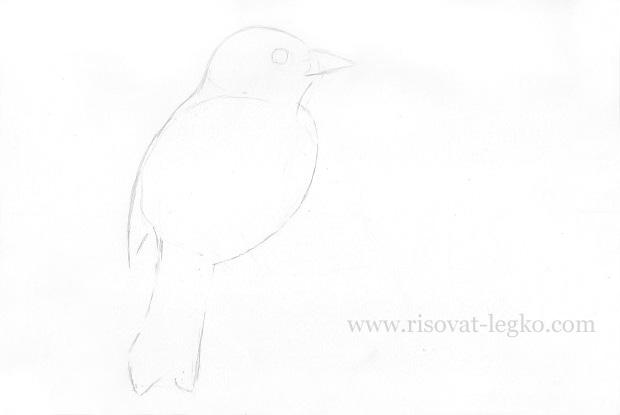 03.Как нарисовать птицу карандашом поэтапно