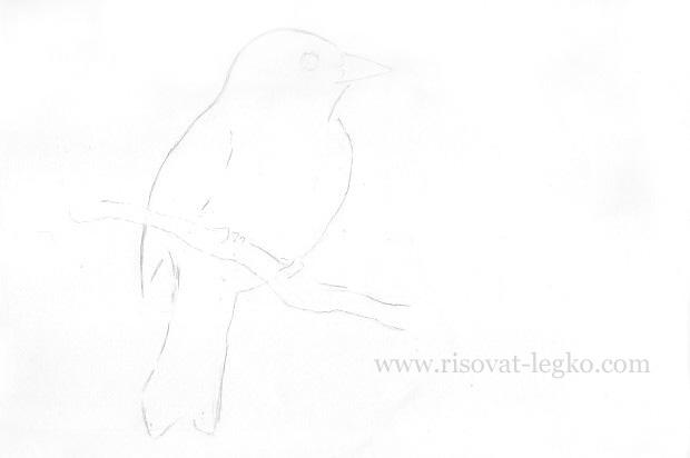04.Как нарисовать птицу карандашом поэтапно