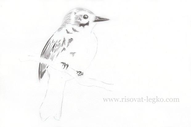 05.Как нарисовать птицу карандашом поэтапно