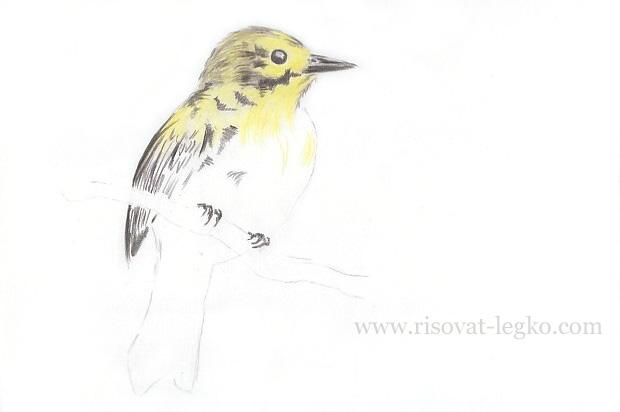 06.Как нарисовать птицу карандашом поэтапно