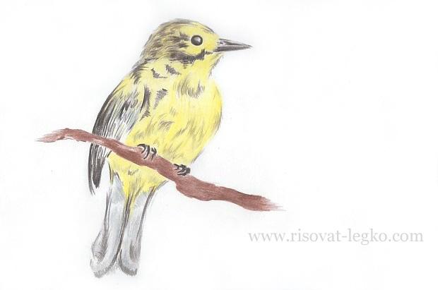 08.Как нарисовать птицу карандашом поэтапно