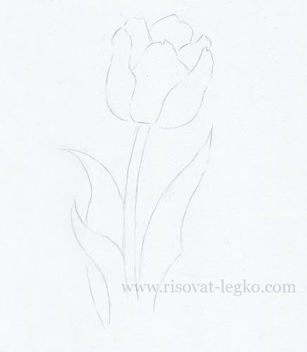 03.Как нарисовать тюльпан карандашом поэтапно