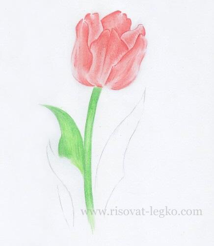 07.Как нарисовать тюльпан карандашом поэтапно