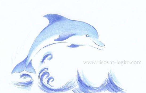 01.Как нарисовать дельфина поэтапно карандашом