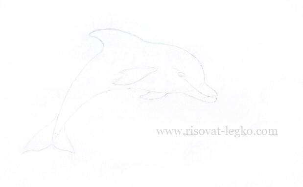 04.Как нарисовать дельфина поэтапно карандашом