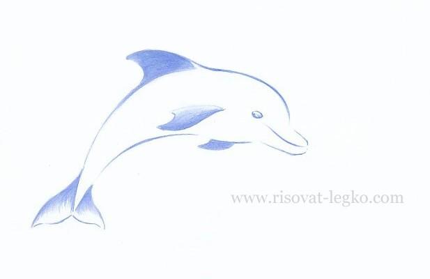 06.Как нарисовать дельфина поэтапно карандашом