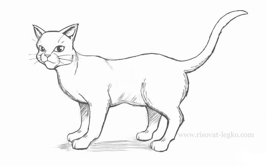 01.Как нарисовать кота поэтапно простым карандашом