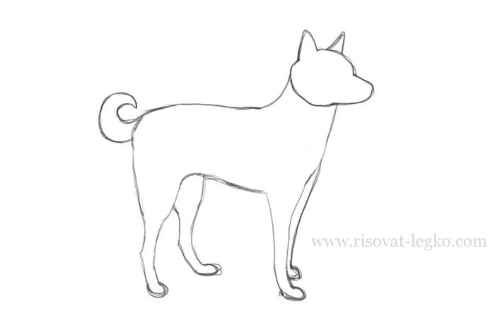 04.Как нарисовать собаку поэтапно карандашом