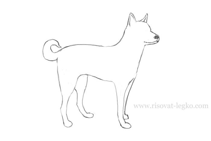 05.Как нарисовать собаку поэтапно карандашом