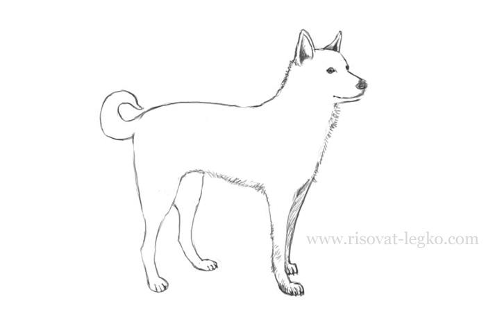 Как нарисовать собаку поэтапно спаниеля