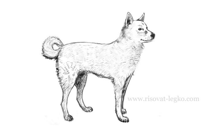 07.Как нарисовать собаку поэтапно карандашом