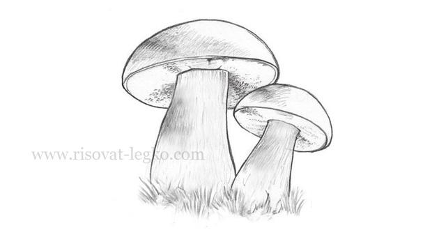 01.Как нарисовать грибы поэтапно карандашом