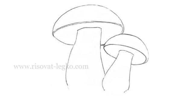 Белый гриб рисунок карандашом