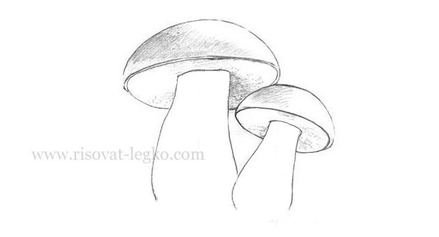 08.Как нарисовать грибы поэтапно карандашом