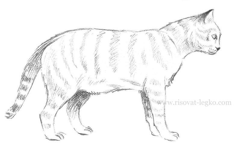 01.Как нарисовать кошку поэтапно карандашом