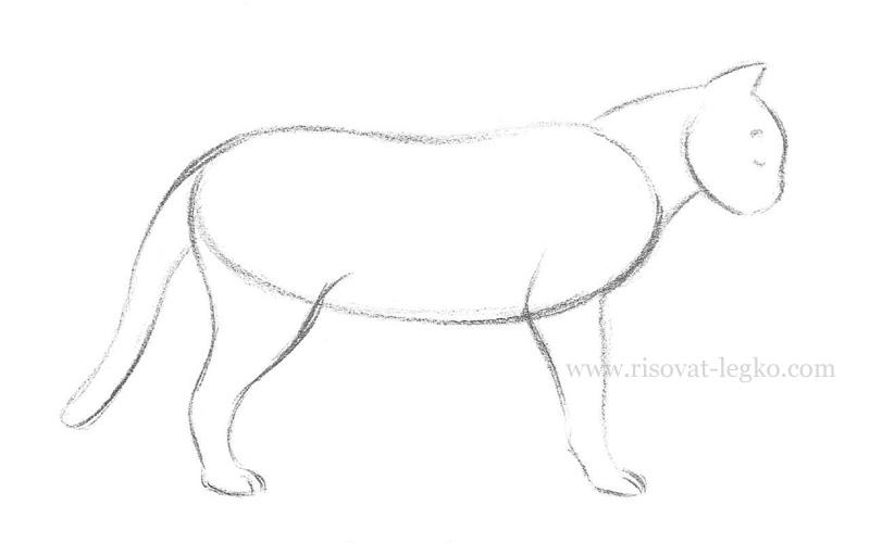 05.Как нарисовать кошку поэтапно карандашом