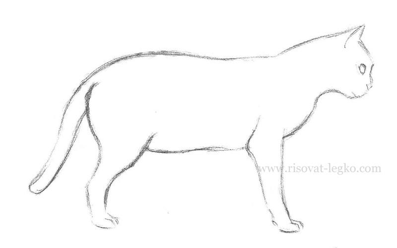 06.Как нарисовать кошку поэтапно карандашом