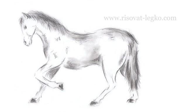 01.Как нарисовать лошадь поэтапно карандашом