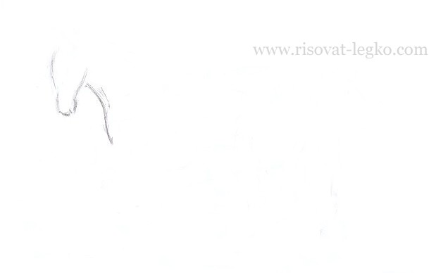 04.Как нарисовать лошадь поэтапно карандашом