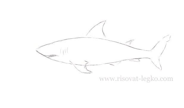 04.Как нарисовать акулу поэтапно карандашом