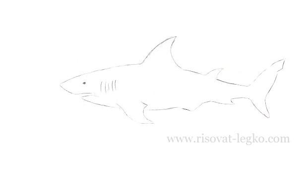 05.Как нарисовать акулу поэтапно карандашом