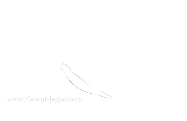 02.Как нарисовать бабочку поэтапно для начинающих