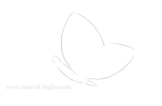 03.Как нарисовать бабочку поэтапно для начинающих
