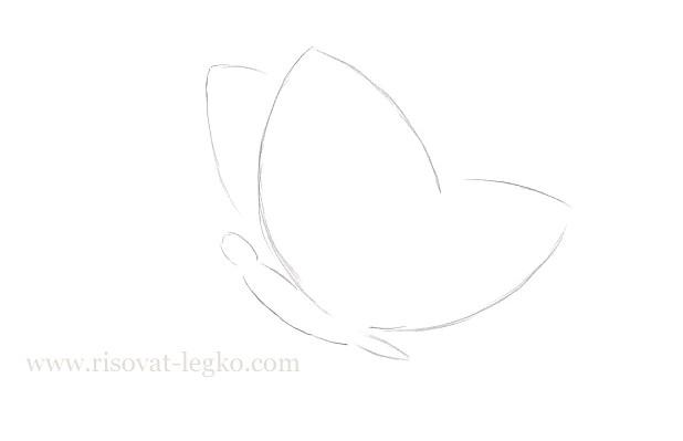 04.Как нарисовать бабочку поэтапно для начинающих