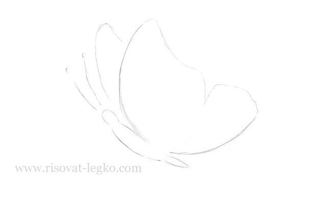 06.Как нарисовать бабочку поэтапно для начинающих