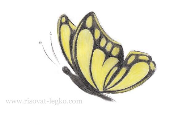 07.Как нарисовать бабочку поэтапно для начинающих