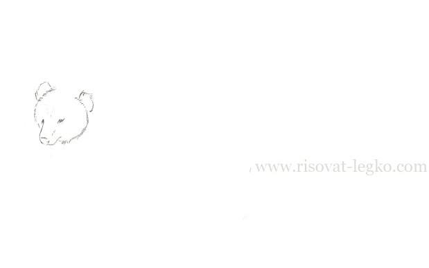 03.Как нарисовать медведя карандашом поэтапно